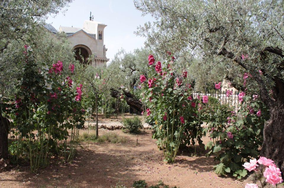 Reiservaringen de zeven vruchtenreis (3)
