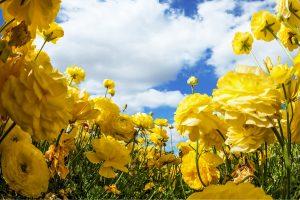 bloem Ein Harod