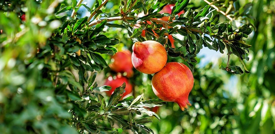 Reiservaringen de Zeven Vruchtenreis 2019 (1)
